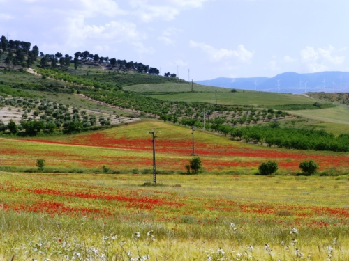 Fields of flowers, courtesy of Elsa/ Campos de flores, cortesía de Elsa