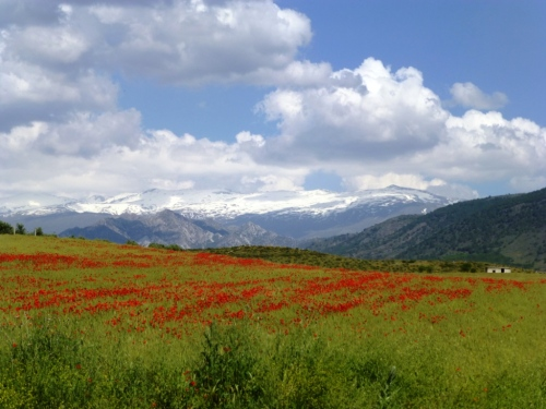 Sierra Nevada, with poppies/ Sierra Nevada, con amapolas