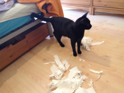 Our kitty really isn´t the best helper when trying to move. Here he supplies his solution to transporting toilet paper...