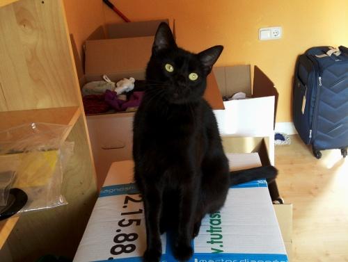 Balú helping with the tape and boxes/ Balú ayudando con el precinto y las cajas